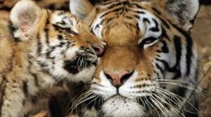 animal protection rusia
